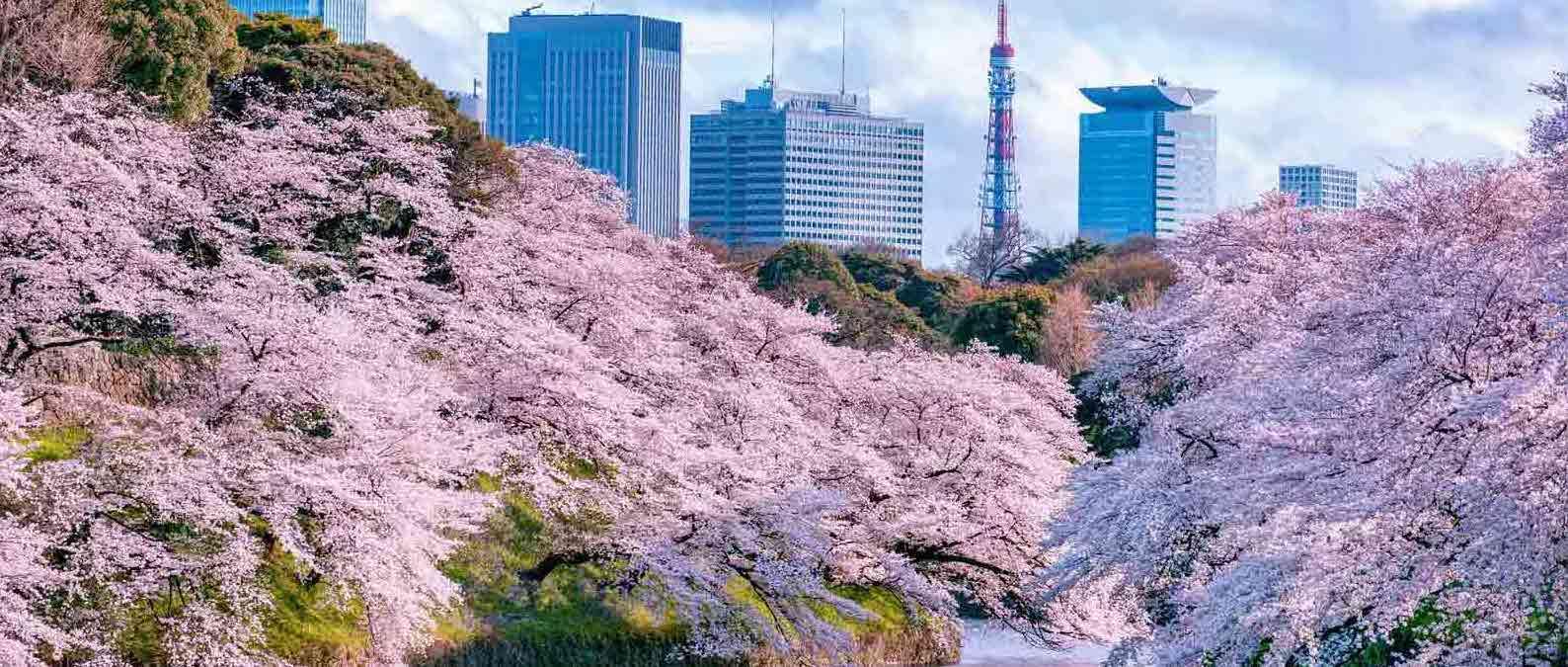 japan foto